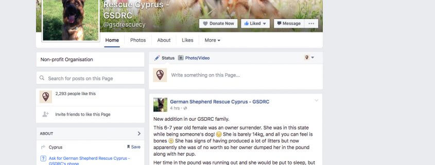 German Shepherd Rescue Cyprus GSDRC Facebook page