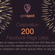 Celebration 200 Facebook Page Likes