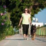 Trainer's Tips, dog walking Cyprus. Amazing young girl with a beautiful young German Shepherd, taking a peaceful dog walk in Kato Paphos, Cyprus. Dog Training Made Easy is a great way to teach young kids how to handle bigger dogs in an easy and fun way!