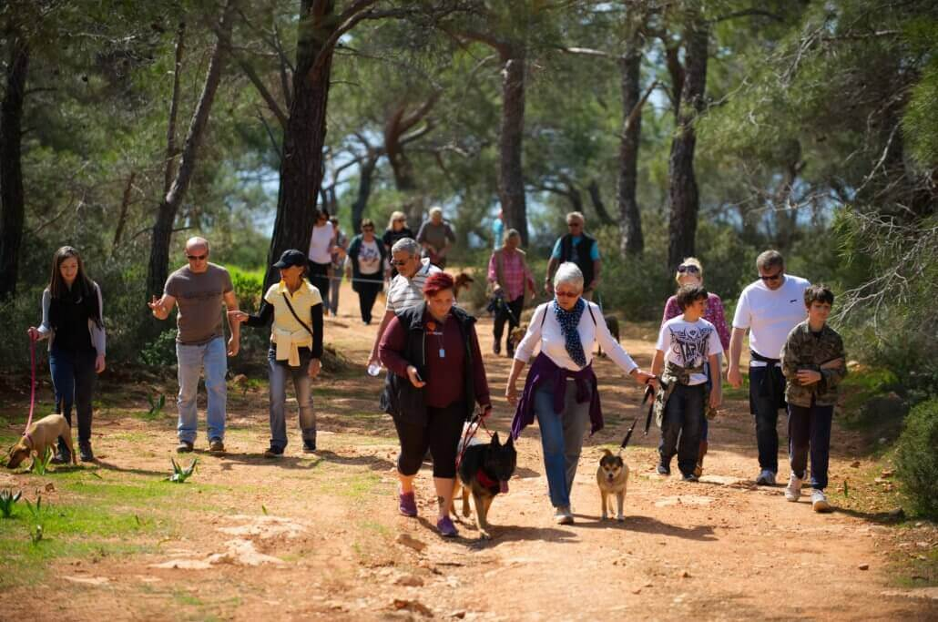 A image from our second public dog walk even in the picnic area of a sunny Peyia